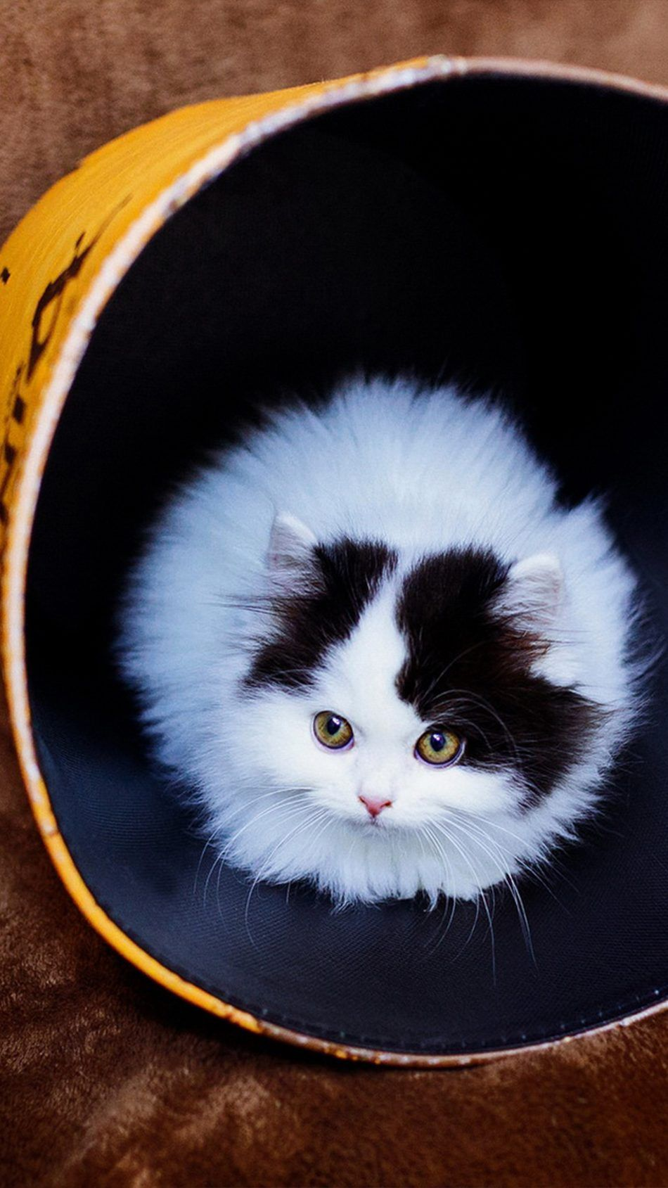 Tiny Cat Big Cup 4k Ultra Hd Mobile Wallpaper Tiny Cats Cats Cute Baby Animals