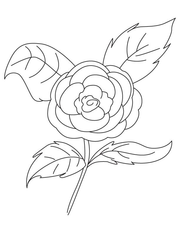 Camellia Rose Coloring Page Coloring Pages Color