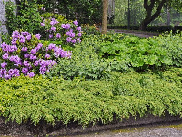 buskar och perenner