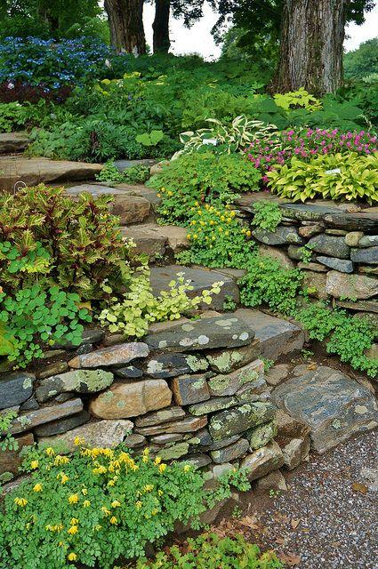 Stone wall with Corydalis, Helichrysum petiolare 'Limelight', Solenostemon, Hosta, Impatiens in the shade garden