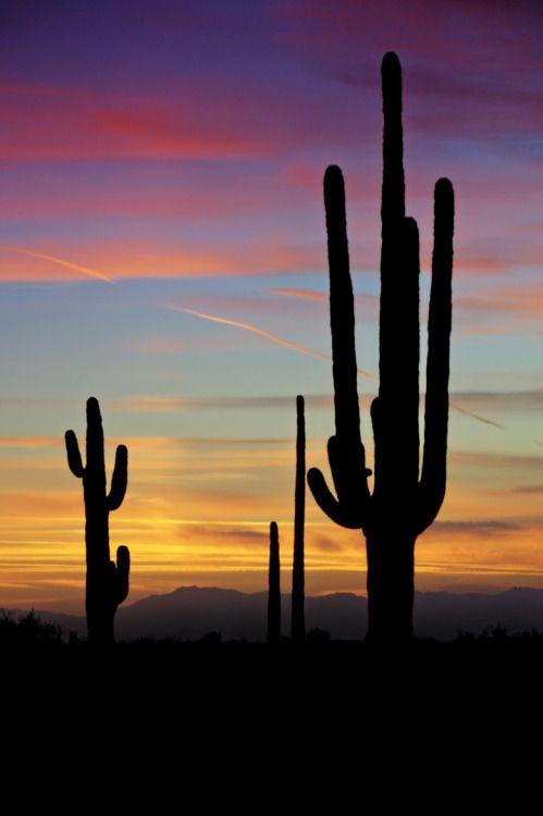 Photo Tumblr Puesta De Sol En El Desierto Fotografia Paisaje Fotos