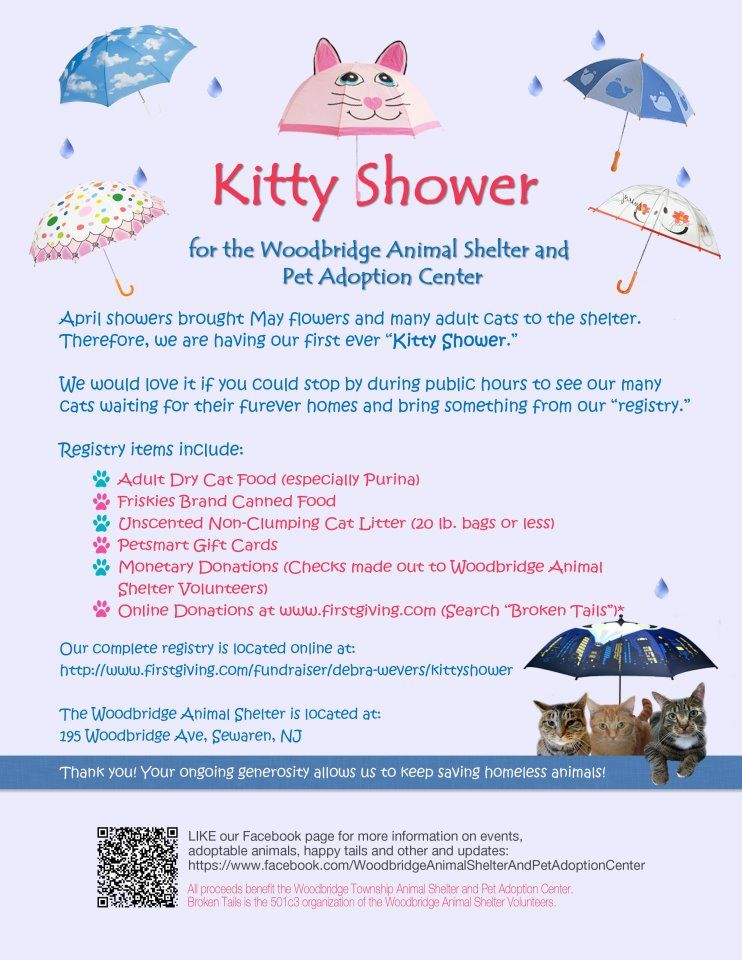 Our Shelter Is Currently At Capacity With Cats Our Kitty Shower