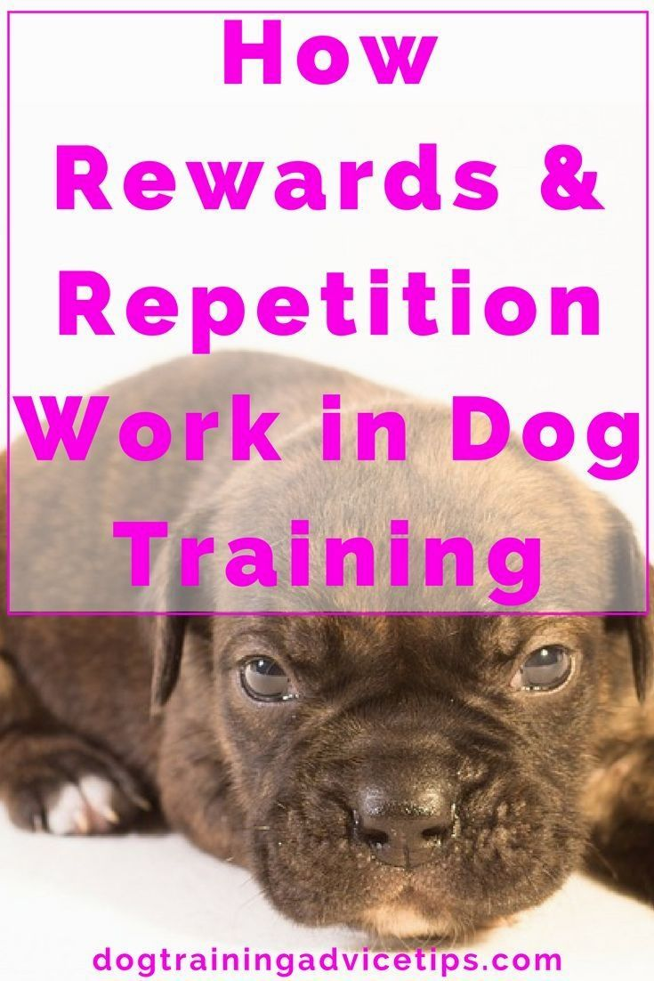 Dog training techniques click pic for various dog