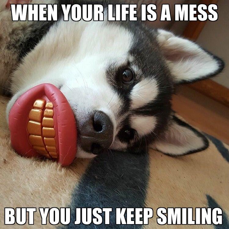 Keep. Smiling. Siberian husky, Husky memes, Husky dogs