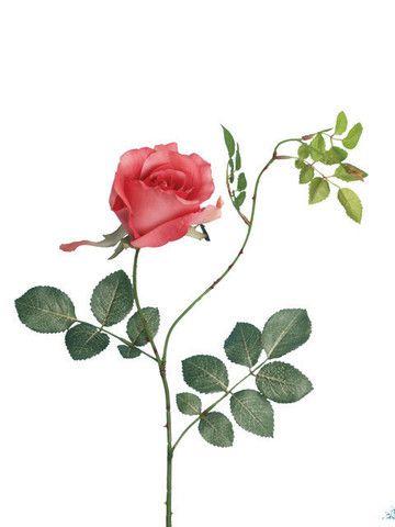 Artificial Rose, Short Stem 'Alice Rose' Dusky Pink