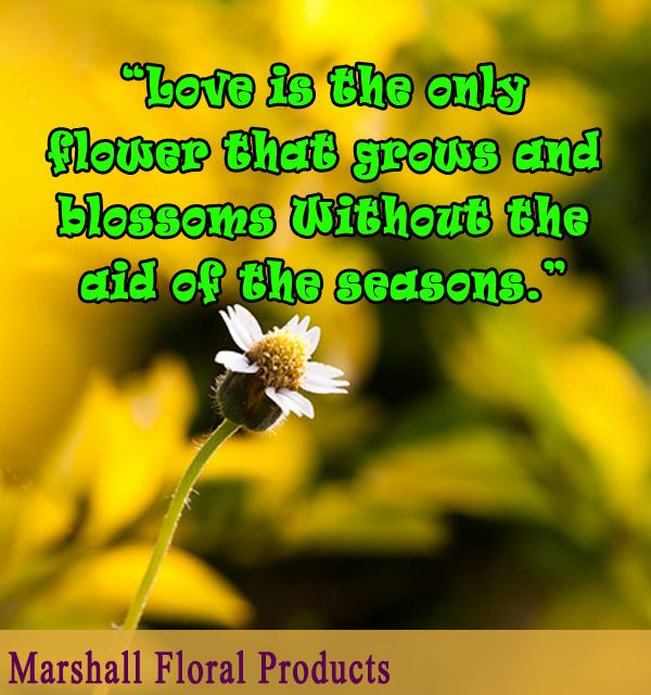 Love Is The Only Flower That Grows And Blossoms Without The Aid Of The Seasons Garden Quotes Quotes Motivational Quotes