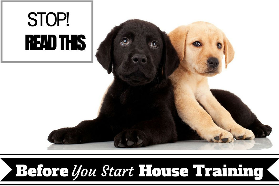 House Training Basic Need To Know Facts Before Starting Puppy Training House Training Training Your Puppy