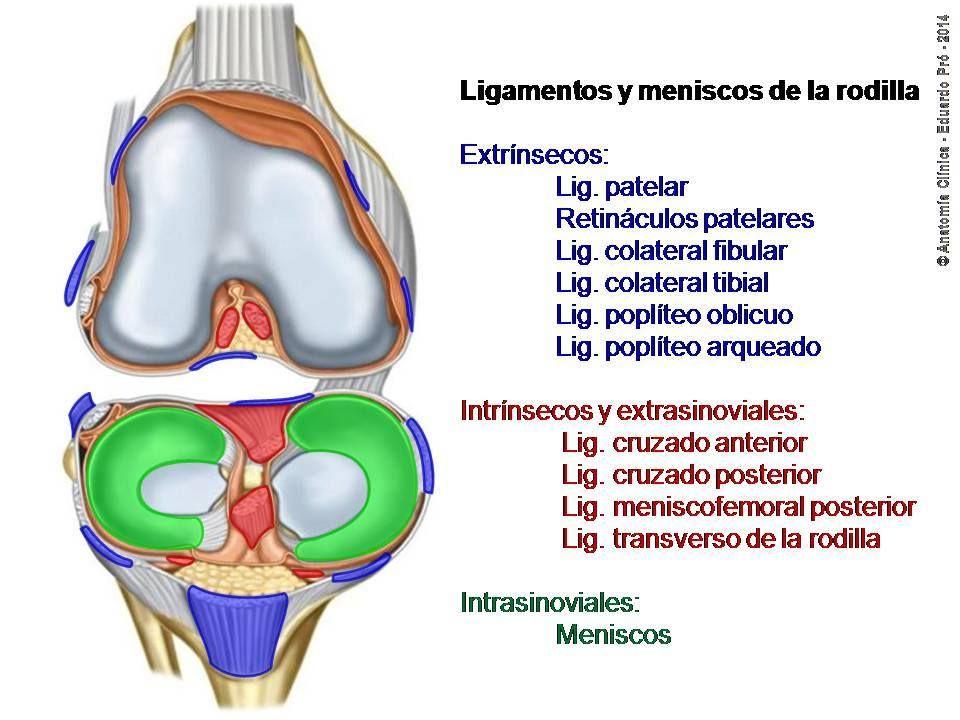 How To Make An Interesting Art Piece Using Tree Branches Ehow Anatomía Salud Y Bienestar Rodillas