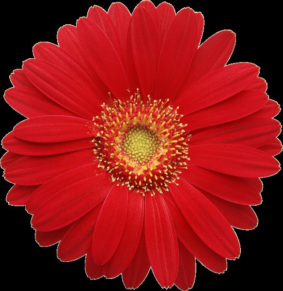 Gallery Recent Updates Free Clip Art Clip Art Flowers