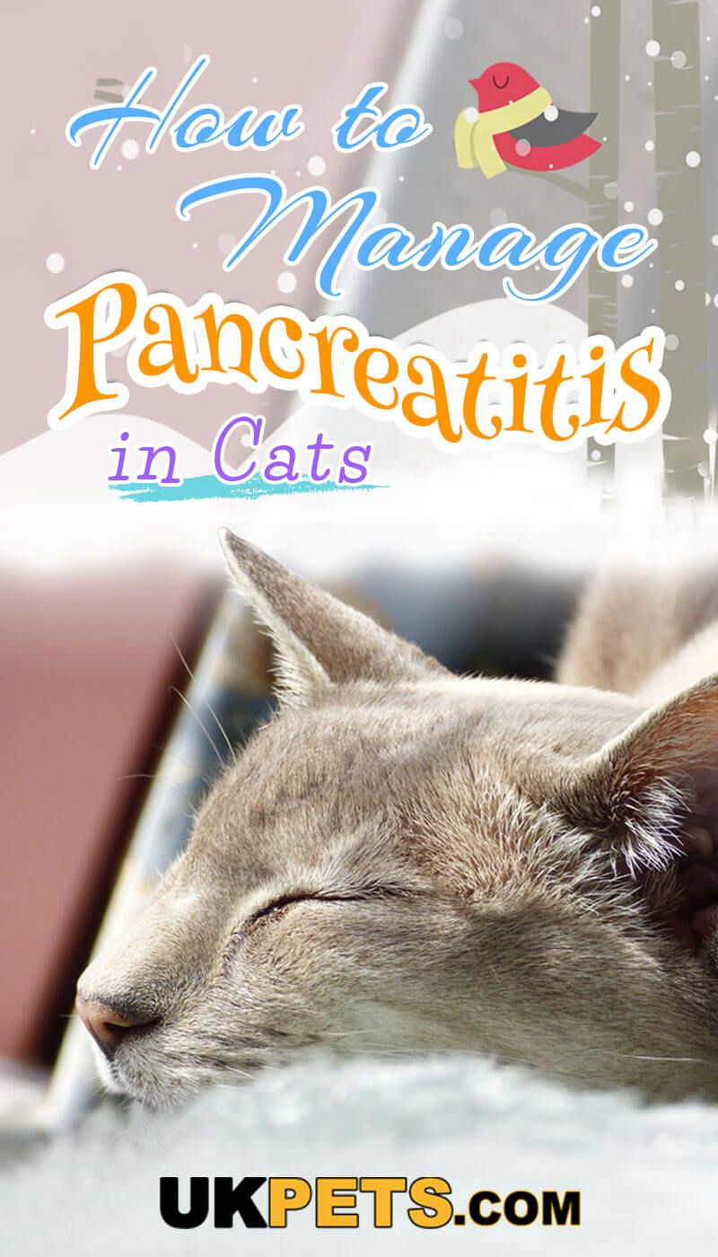 How To Manage Pancreatitis In Cats Kitten Care Cats Kitten Health