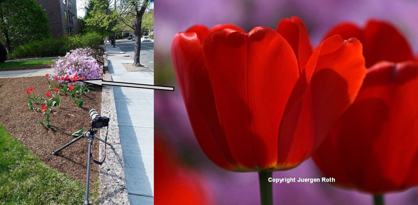Flower photography tip watch your background photo tips u blog