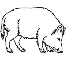 wildschweine ausmalbilder ausmalbilder wildschweine | wildschweine bilder, ausmalen, tiere zum