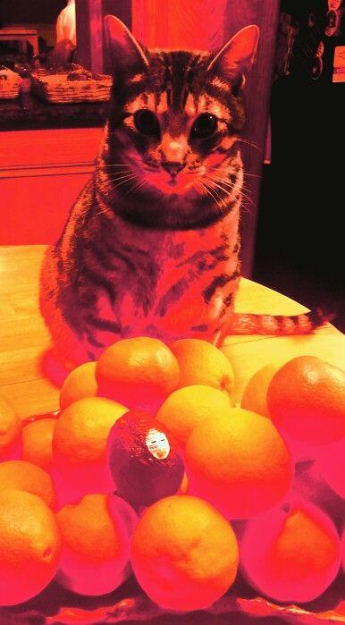 Oranges anyone!