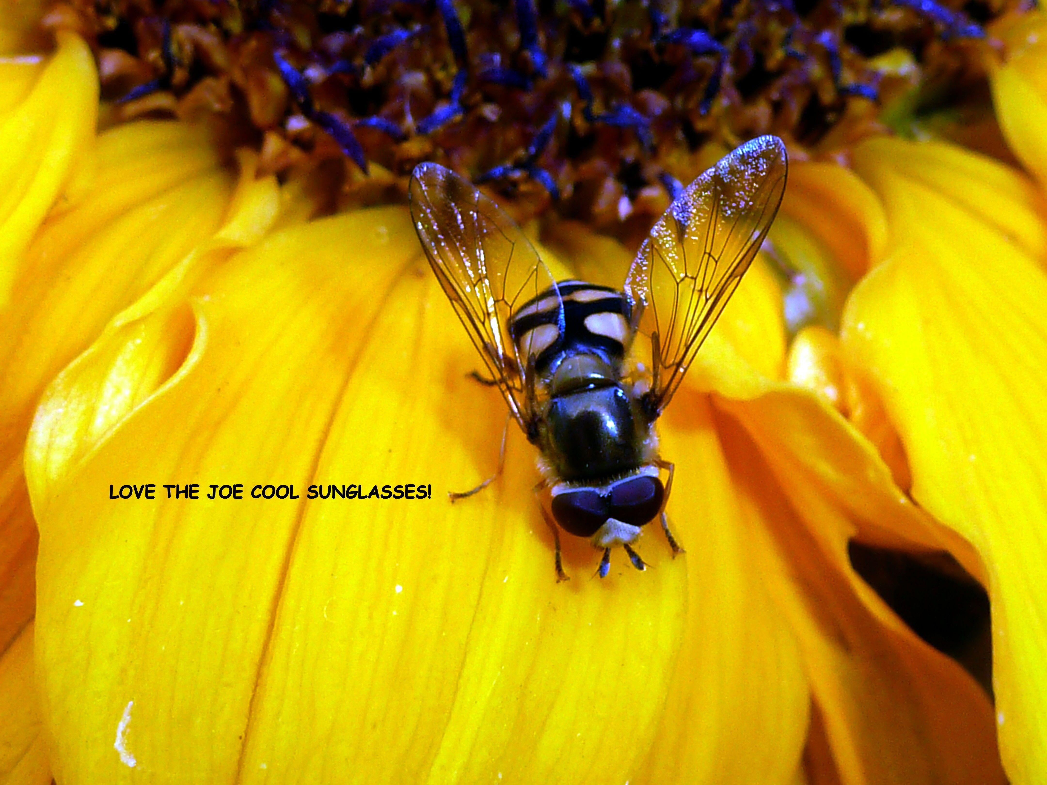 Taken by D.Kennedy - Sweat bee