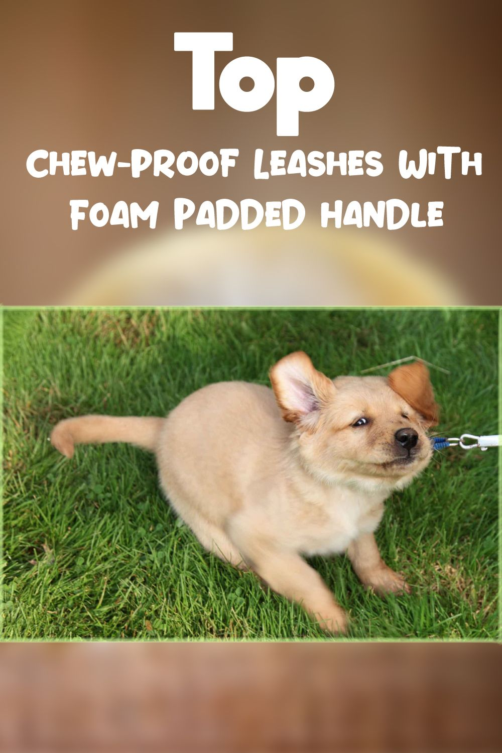 Find Some Best Dog Leashes With Foam Padded Handle