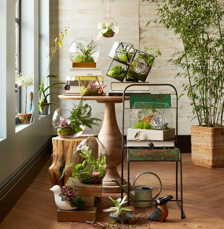 Un doux jardin d 39 hiver jardin d 39 int rieur plante madmeoiselle clau - Ikea plante interieur ...