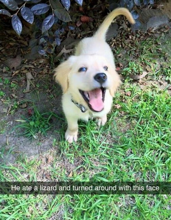 18 Puppies Who Are Up To No Good | Pets | Funny animals
