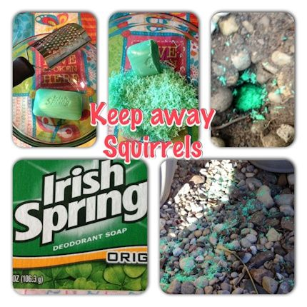 How to keep away squirrels have done pinterest - How to keep squirrels away from garden ...