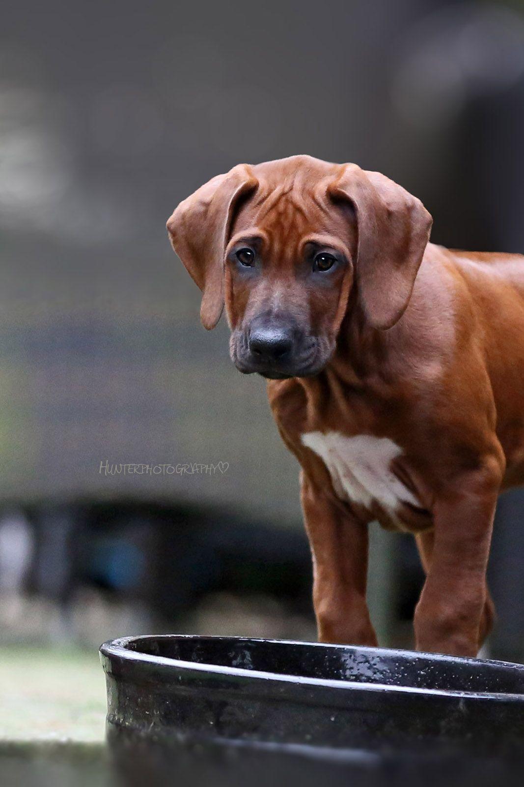 Blog Hunterholm Hunde, Hunderassen, Hunde welpen
