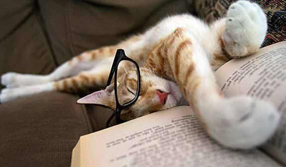 Well-read cat