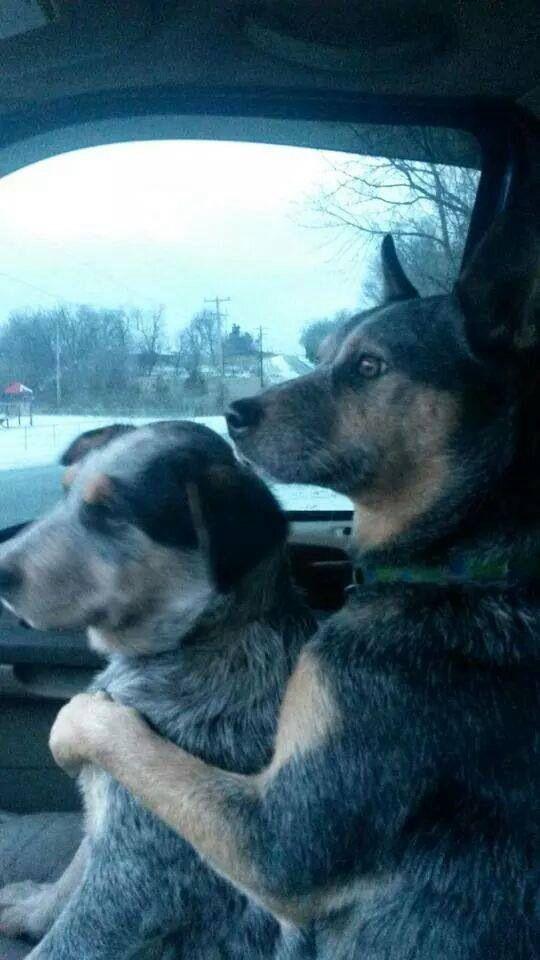 A doggy seatbelt! Gorgeous!