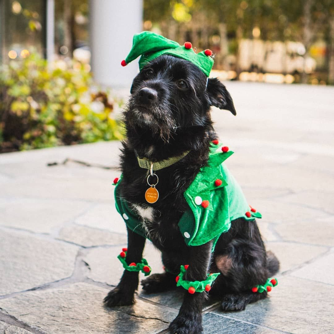 Head On Down To Occidental Square For Pioneer Square Howlidays 12 3pm Join Us For A Costume Contest Parade A Dog Park With Tu Costume Contest Dog Park Dogs
