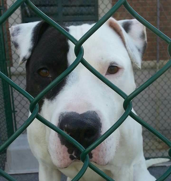Kane is #urgent #rescue at #JTAC transfer team on Facebook in #Joliet #illinois. Needs out by Wednesday! !