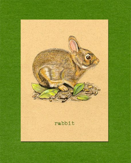 ACEO ATC Rabbit Bunny Great for kids  ACEO ATC  Pinterest