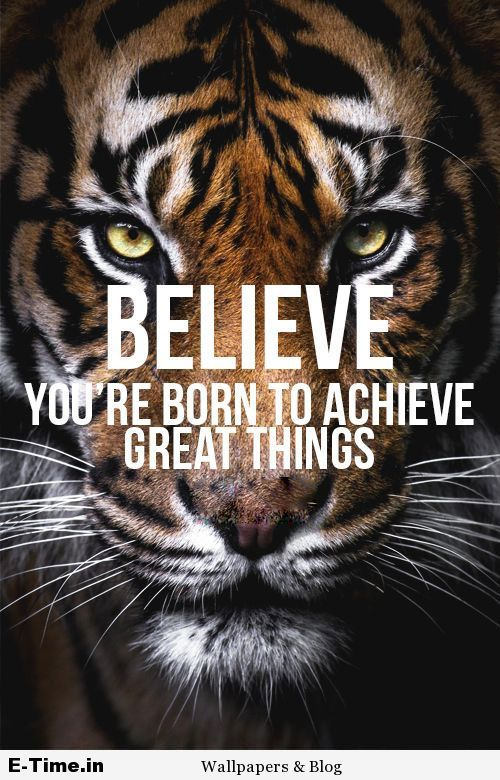 Tiger Quotes Enchanting Pin By ETimein On ETimein Blog Pinterest Motivation