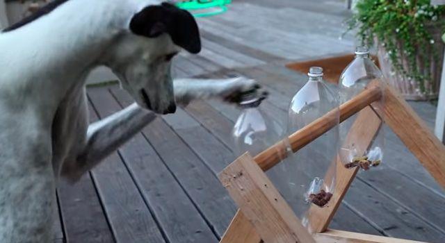 Brian Mora Dos Perros Galgos Jugando Al Juego De Botellas Par Perros Juegos Perros Mascotas