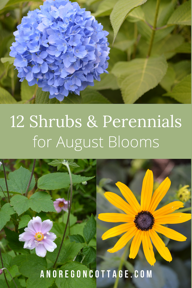 What To Plant For August Blooms An Oregon Cottage In 2020 Budget Flowers Flower Care Plants