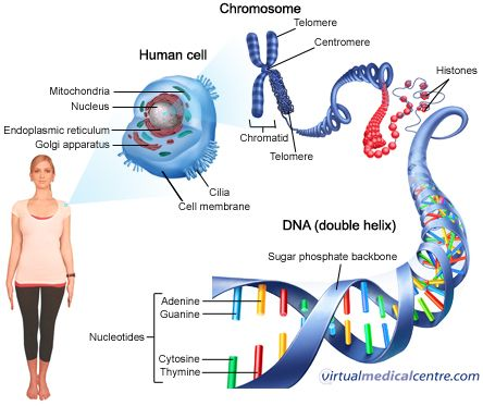 Genetic Testing Also Customarily Acknowledged As DNA