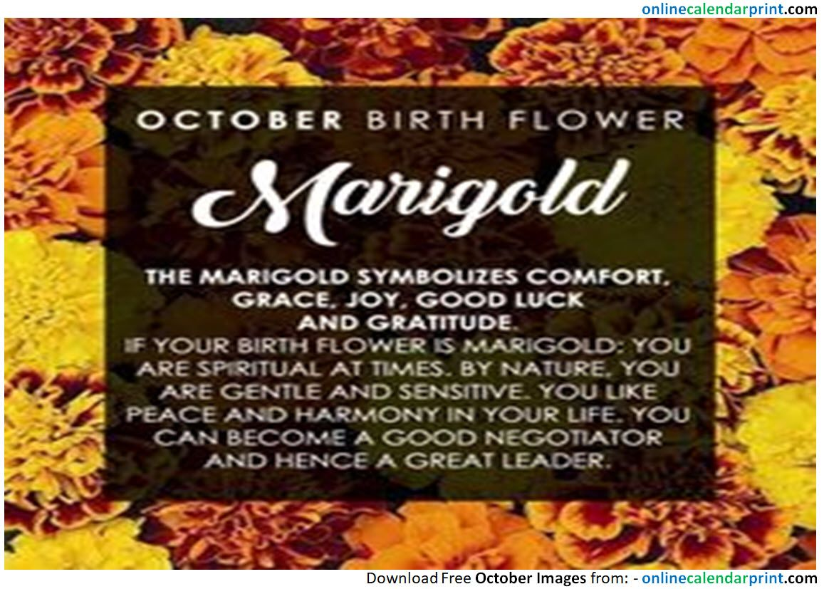 October birthday flowers october images in 2018 pinterest october birthday flowers october birthday flowers birthdays image birthday florals izmirmasajfo
