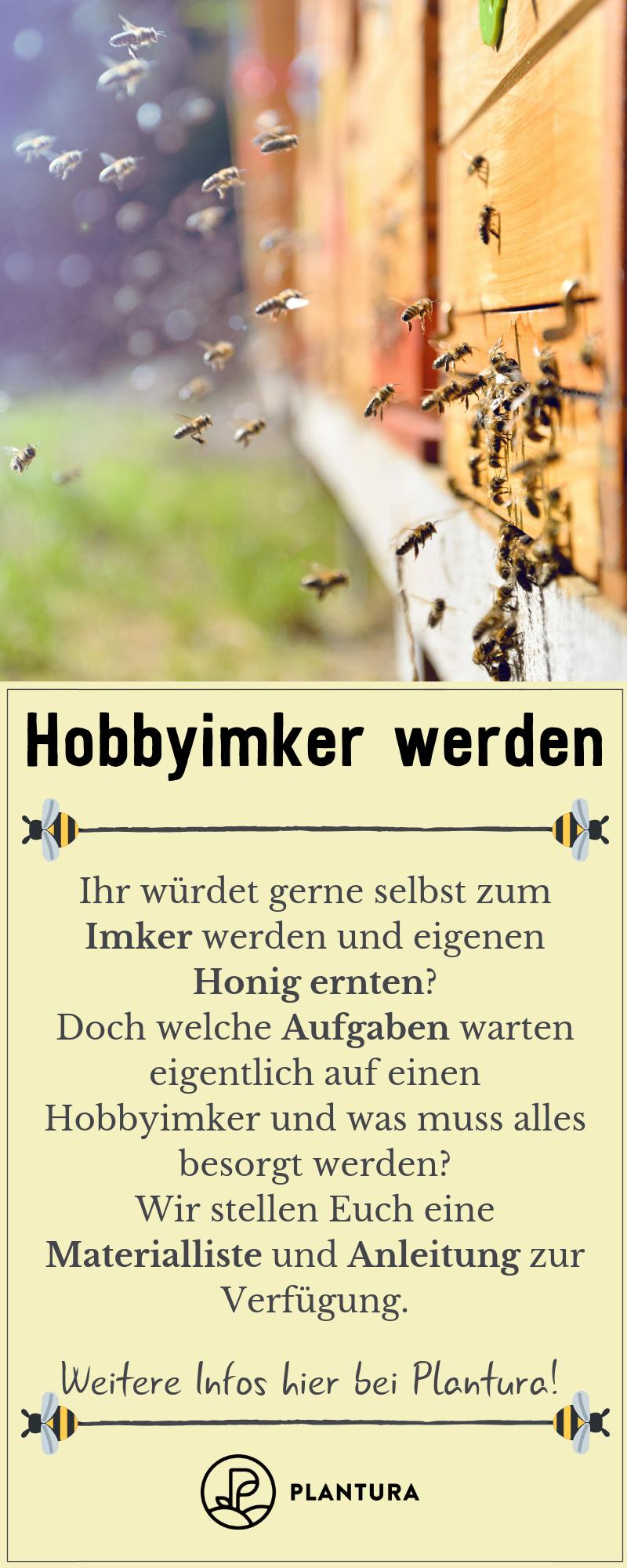 Photo of Wege zum Hobbyimker: Anleitung & Tipps vom Profi – Plantura