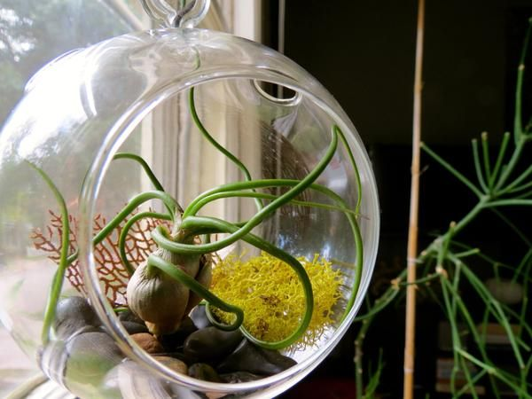 Hanging Bulbosa Guatemala Round Globe Terrarium with Black Stones, Sea Fan, & Chartreuse Reindeer Moss