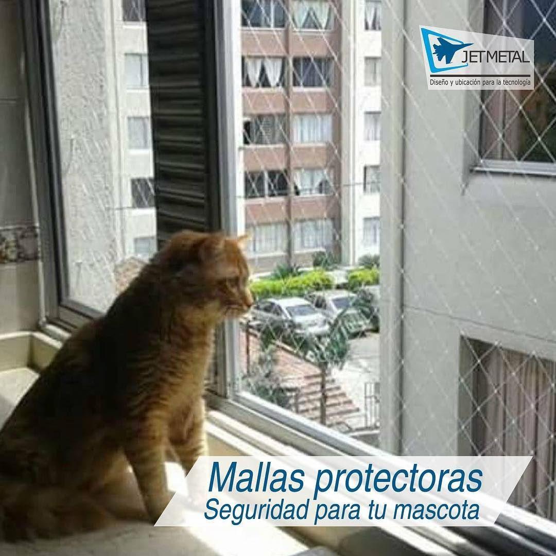 Cuida Las Travesuras De Tu Gato Con Las Mallas Protectoras Para Ventanas Balcones Patios Y Rejas Whatsapp Gatos Mascotas Paneles Japoneses