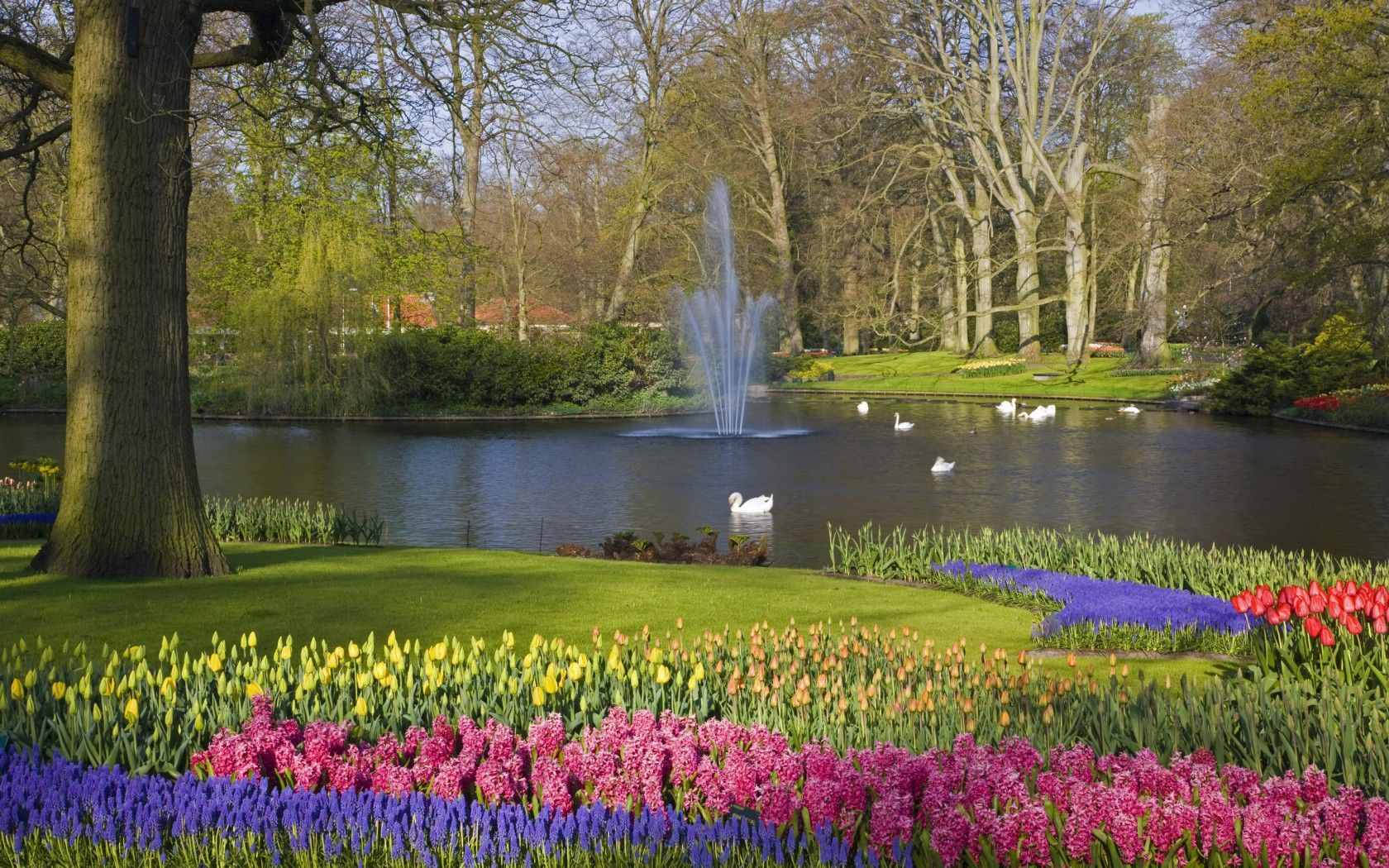 Things not to miss in Netherlands | Photo Gallery | Rough Guides. Keukenhof Gardens