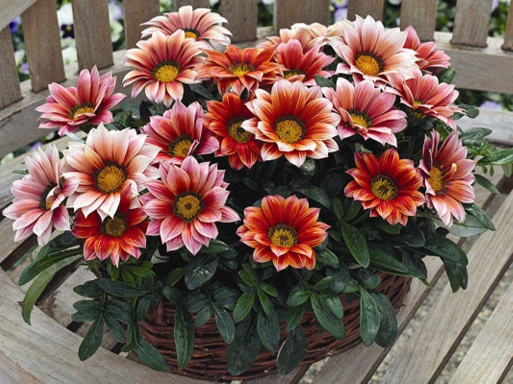 какие многолетние цветы вырастить из семян