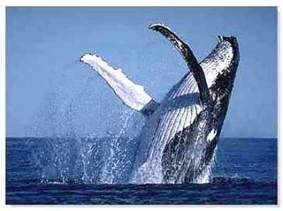 ballenas - Buscar con Google
