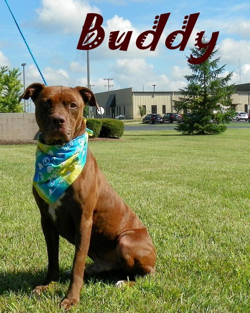 Adopt buddy on petfinder save a dog shelter dogs