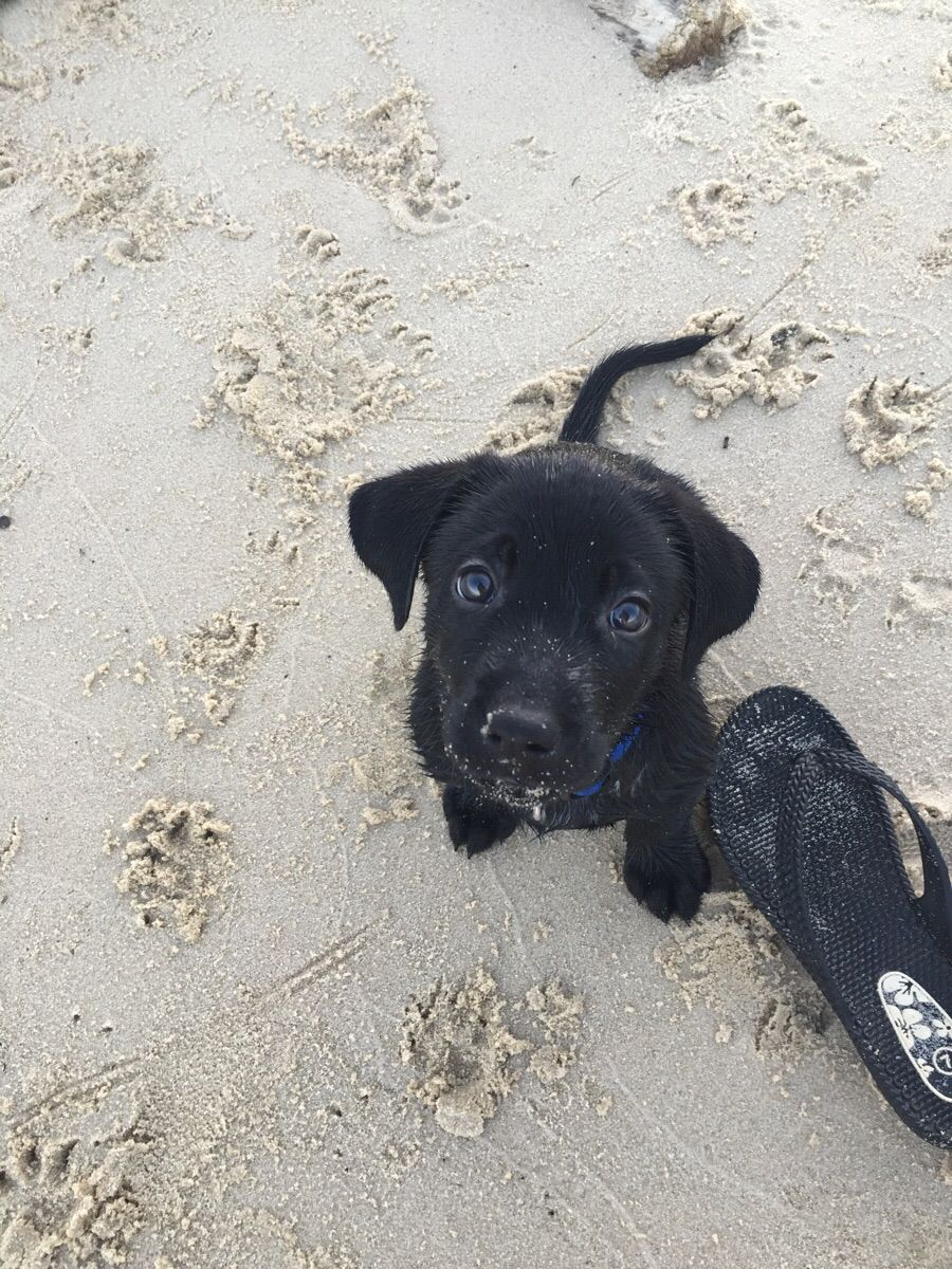 First trip to the beach. I think he loved it.