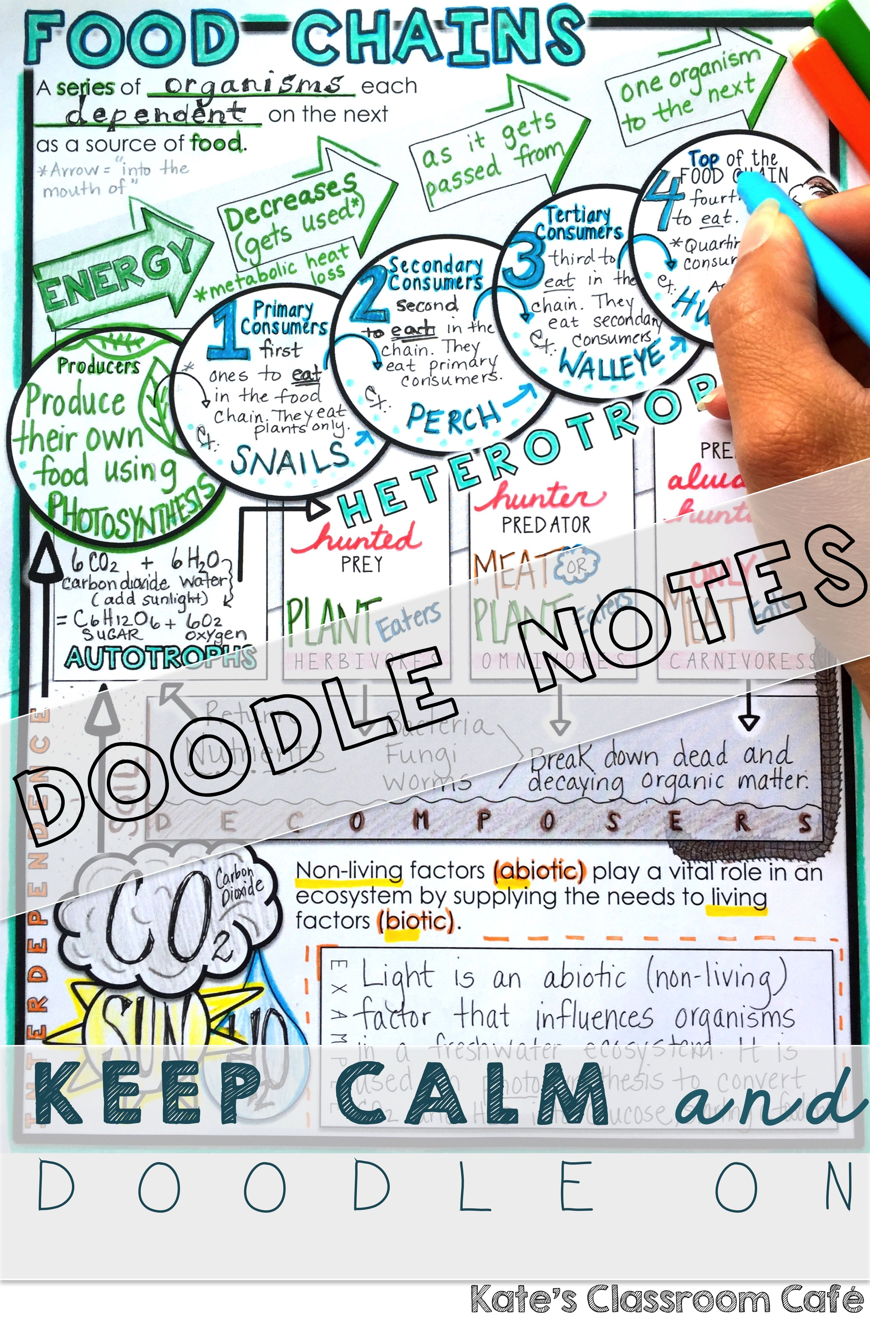 Food Chain Doodle Notes With Images