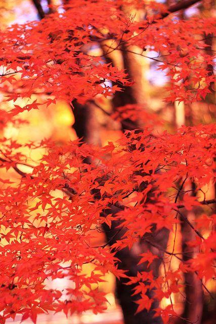 Hananuki Valley, Takahagi-city,IBARAKI,,  Japan !!!! Flickr - Photo Sharing!