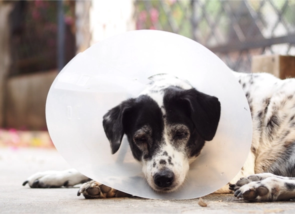 Spaying and Neutering Dogs 101: Everything You Need to ...