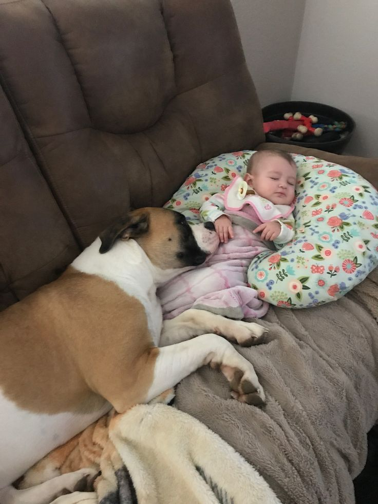 American Bulldog Protecting My Grand Baby While She Sleeps Bulldoglovers Protector Doglovers Pitbull Terrier Dogs And Kids Pitbull Dog