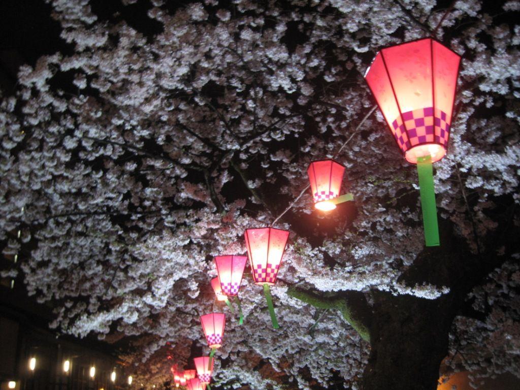 japanese light festival - Google Search