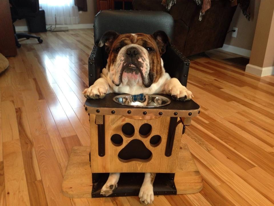 Dog High Chair S Replica We Build Bailey Chairs For Dogs Diagnosed With Canine Megaesophagus