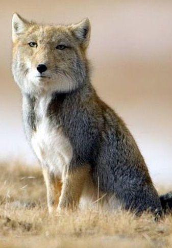 Animales - Naturaleza - Página 2 A5175cda2319781c3441db389785a3b6