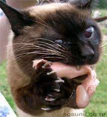「BAD KITTY」の画像検索結果