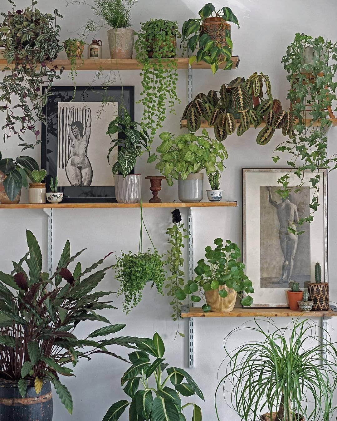 2020 的 65 Beautiful Indoor Plants For Minimalist Home 主题